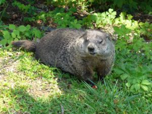 Parenting Lessons From Groundhog Day