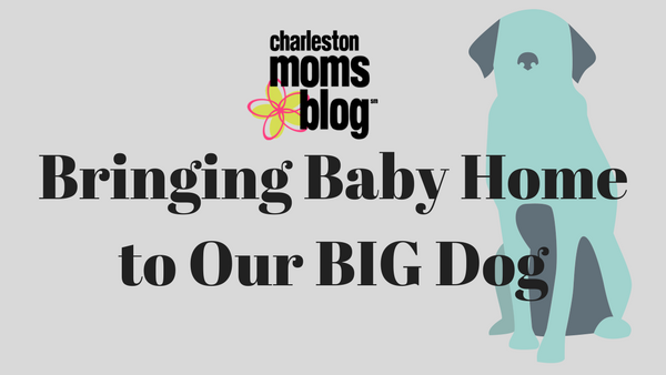 Bringing Baby Home to Our Big Dog