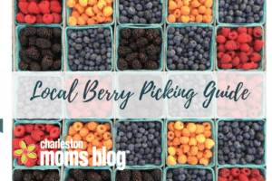 Local Berry Picking Guide