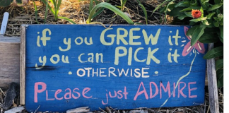 Grow Your Own Food_ Community Gardens around Charleston Can Help Charleston Moms