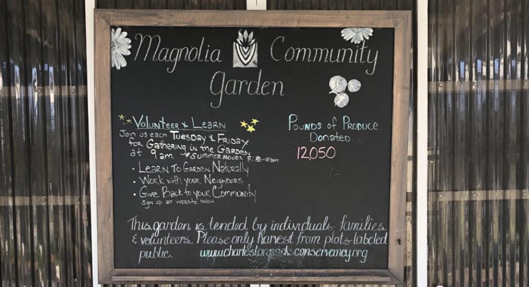 Grow Your Own Food_ Community Gardens around Charleston Can Help Charleston Moms