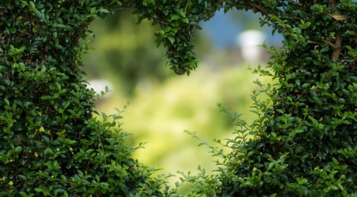 Sustainable Valentine's Day Gifts & Things to Do Charleston Moms